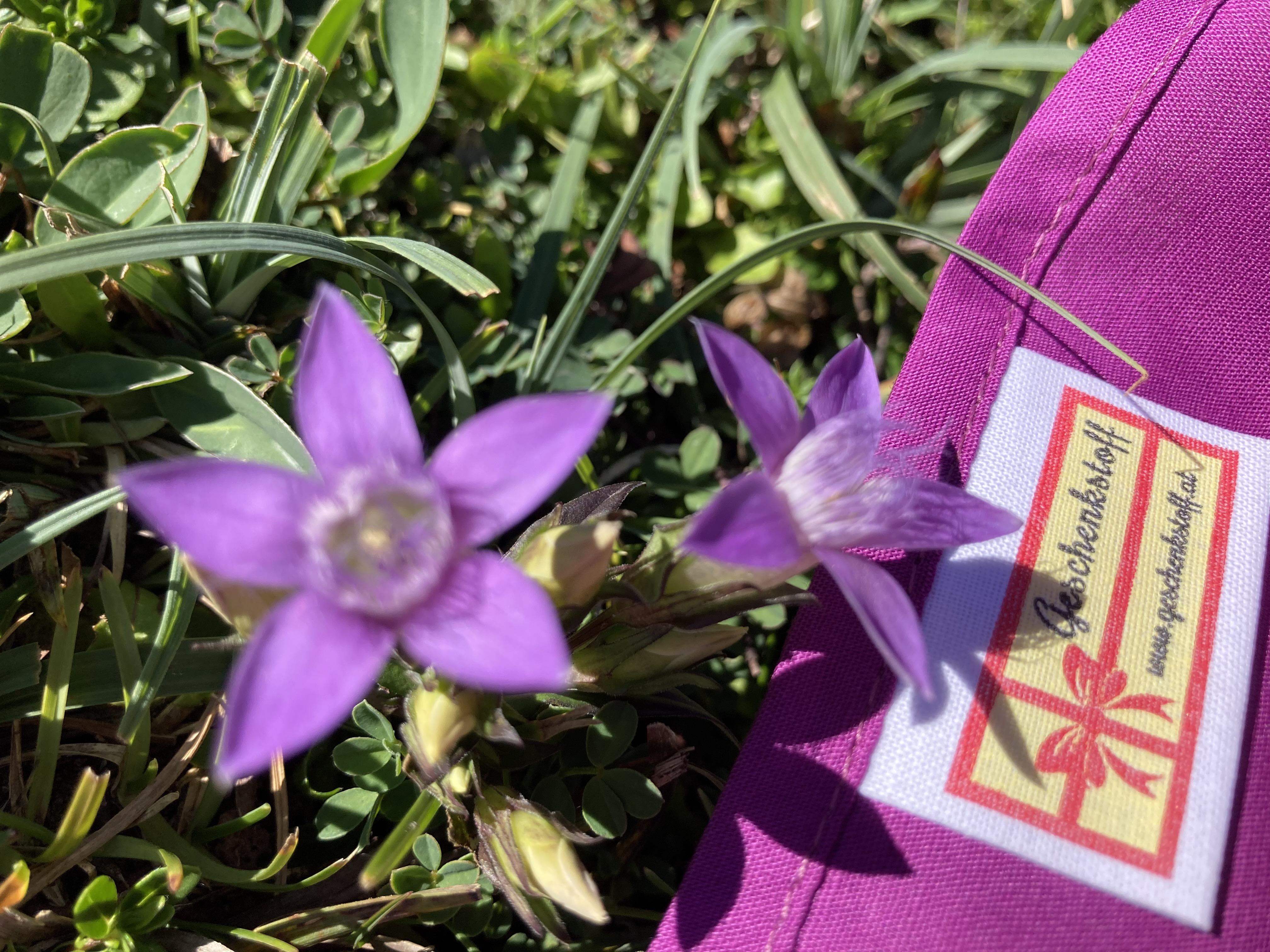 Einfach: Violett ist nett (70x50cm)